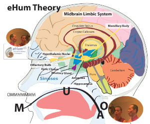 Brain and eHum Theory